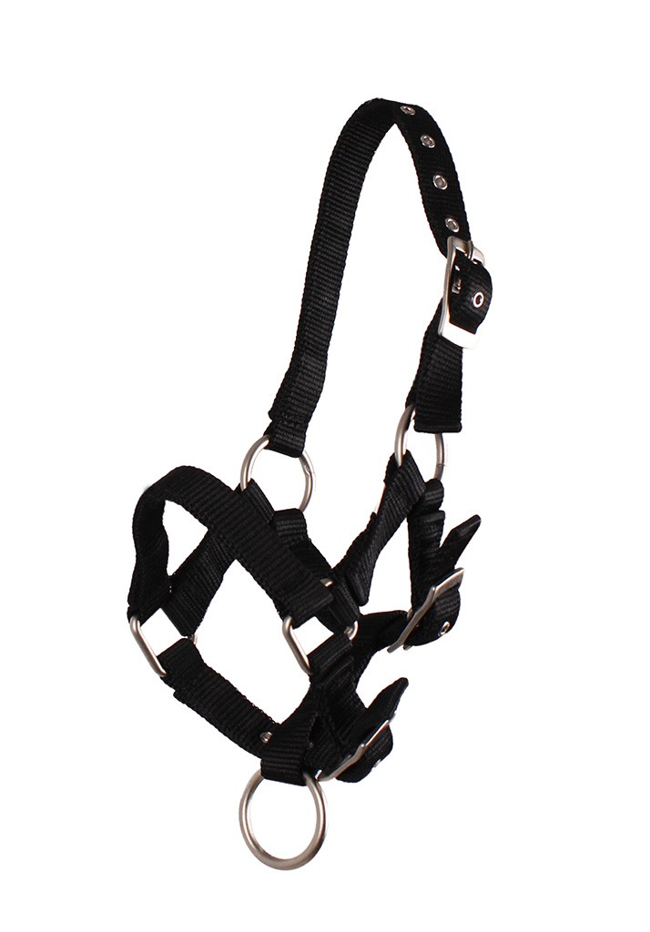 QHP veulen halster zwart maat:3 - Halsters en Touwen