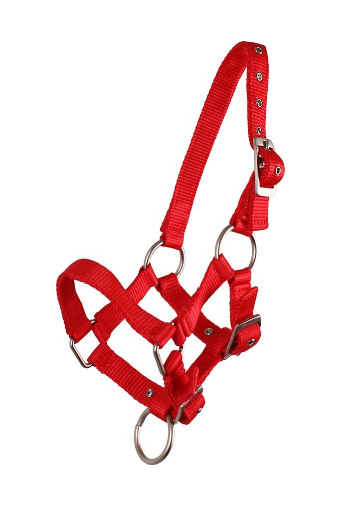 QHP veulen halster rood maat:3